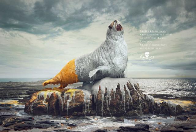 Watchout - Sea Shepherd - Salamagica